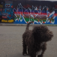 dekis_hmni_twc_graffiti_32
