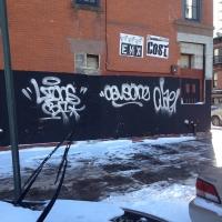 Lions_Graffiti_SprayDaily_09